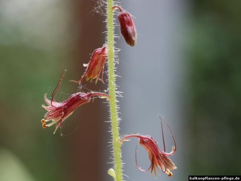 Huckepackpflanze