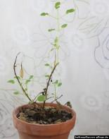 Balkonpflanze Frühling