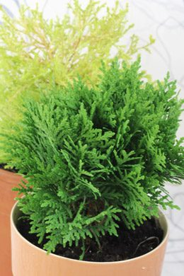 winterharte balkonpflanzen wie zum beispiel kr uter wildstauden oder str ucher. Black Bedroom Furniture Sets. Home Design Ideas